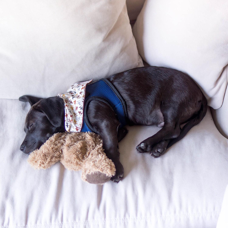 Mylo Sleeping on Couch