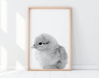 Chicken Poster, Chicken Print, Chicken Cub Print, Chicken Art, Fluffy Chick, Nursery Animal, Black And White Print, Chick Printable, Nursery