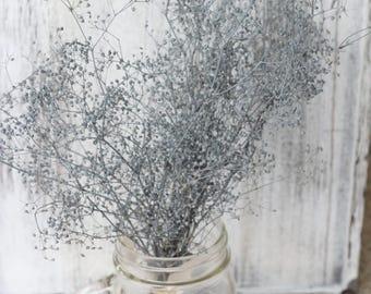 Gray Flannel Shade Dried Baby Breath bunch, Dried Gypsophila Flowers, Dried Flowers