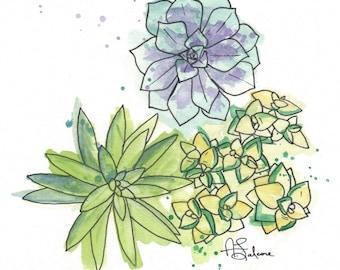 """Succulents A 10x10"""" Matted Giclée Print"""