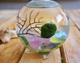free marimo moss ball, marimo moss terrarium kit, Japanese Marimo Moss Balls, Aquatic Living Plants for Aquarium Terrarium Accessories