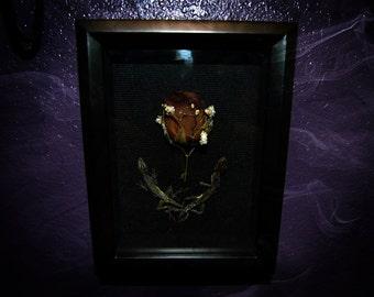 Lizard Shadow Box