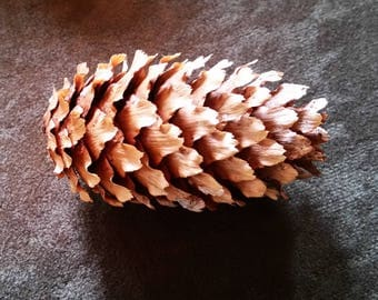 Blue Spruce Pine Cones, Natural Pine Cones, Home or Wedding Decor, Fall or Winter Decorations, Crafts Wreaths Ornaments Potpourri