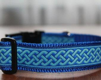 Dog collar collar dog blue