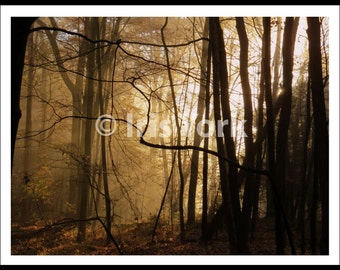 Morning Light, Dawn, Sun Through Trees in Morning, Forest Photo, Landscape, Woods, Trees in Silhouette, Woodstock, Wall Art Gift