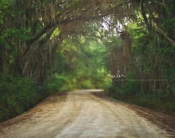 Tree Canopy winding road digital background/ backdrop