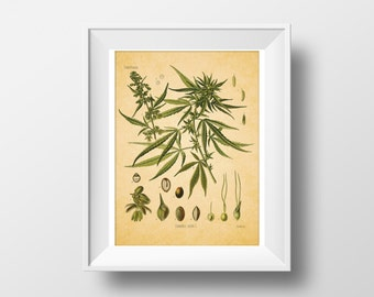 Botanical Illustration Print, Plant illustration, Pot Plant Print, Cannabis Sativa, Medicinal plants art, drug art, Weed, wall decor