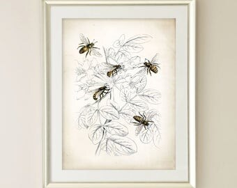 Vintage Honey Bee Art Print Farmhouse Decor Wall