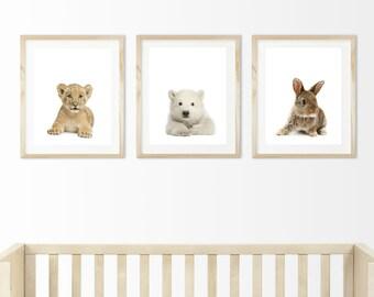 Polar bear cub, 8x10 Printable, Baby animals, forest animals, nursery art