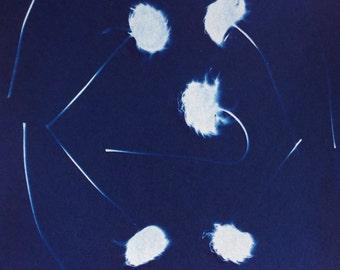 Clematis Vine, Cyanotype print, sunprint, blue print, nature photo, botanical art print, unique floral print, blue garden, modern photo