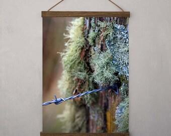 Nature Photography - Lichen