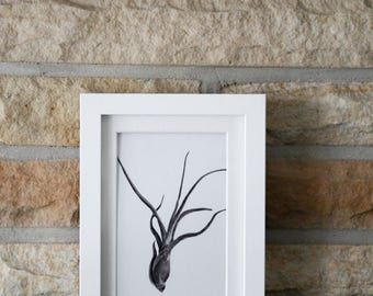 Abstract Black Vertical Air Plant Spring Summer Home Decor Art Minimalist Photograph Print