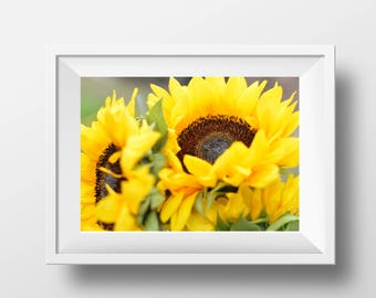 Sunflower photography, printable, home decor, digital download, art