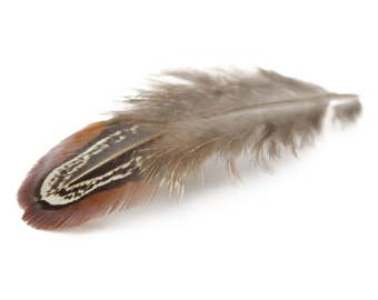 Ringneck Pheasant Plumage Almond Feathers (Bulk)
