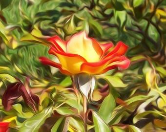 Digitally Enhanced 8x10 Photo Print - Rose from San Jose Rose Garden