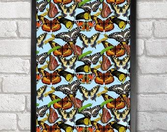 Butterflies - Larvae Pattern Poster Print A3+ 13 x 19 in - 33 x 48 cm  Buy 2 get 1 FREE