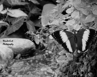 Black & White Butterfly Print