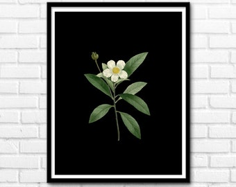 Margherita Botanical Print, Printable Art, Botanical Flower, Wall Prints, Digital Print Art, Wall Decor INSTANT DOWNLOAD - 1041