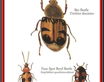 Beetle Print, three beetle print, Insect art, Insect Print, Beetle art, Vintage inspired, Encyclopedia Print, Unusual print, art
