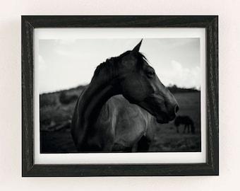 Horse Portrait B&W Print