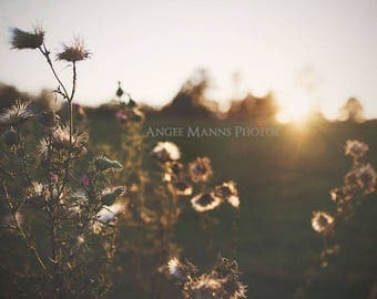 Nature Photography, Weeds at Sunset, Farm Photography