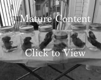 Fetal Bunny Wet Specimen--Black and White