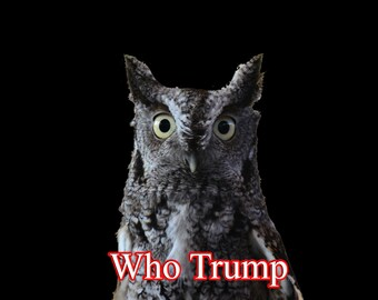 Who Trump astonishment eyes owl endangered politician