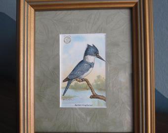 Framed Vintage Belted Kingfisher Card