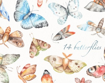 Watercolor butterfly clipart (moth, butterflies, set, collection)