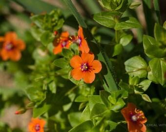 Spring Macro Flower Prints