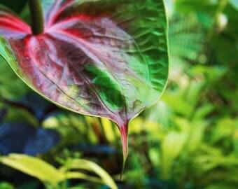Plant, Flower, Photography, Digital photography, Instant download, Wall art, Green, Nature, Photo, Home decor, Art, Leaf, Garden, Botanical