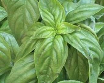 Basil - Californian Dried & Cut - Sweet Flavor