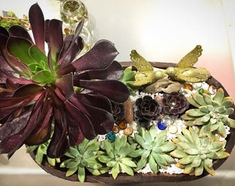 Mother day succulents gift