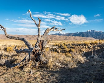 """Deadwood At The Dunes 