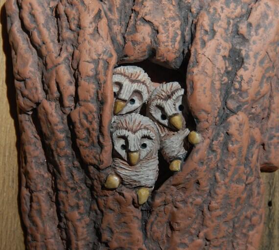 Baby Barn Owl Nest