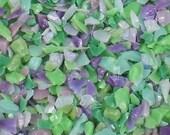 Destash Glass Frit Blend Lavender Sea Green Dragonfly Glassworx Siren's Song COE 94-96 0.1oz Bag