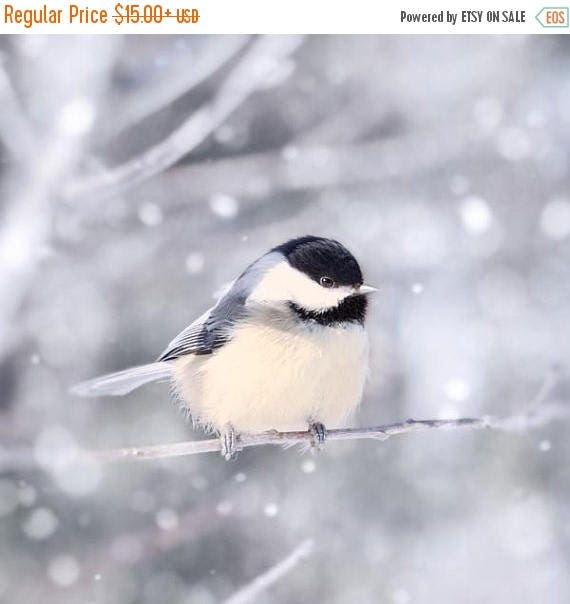 Bird in Snow Fine Art Print, Animal Photography Print, Bird Photography, Winter, Bird Photo, Nature Photography, Chickadee in Snow No. 11