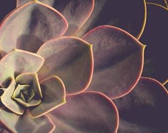 Succulent Photograph - House Plant Photo - Gray Purple Plum Art - Leaf Photography - Leaf Art - Minimalist - Wall Art - Neutral Decor