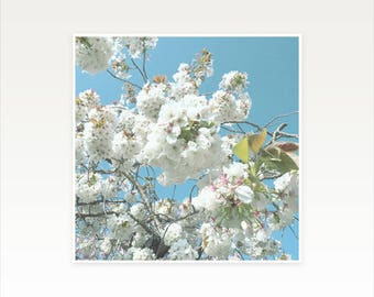 Cherry Blossom Art, Spring Decor, Blue and White Art - Spring Blooms