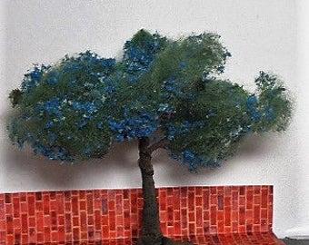 Miniature jacaranda tree