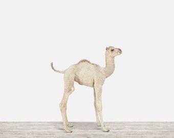 Animal Nursery Art Print. Baby Camel. Safari Animal Wall Art. Animal Nursery Decor. Baby Animal Photo.
