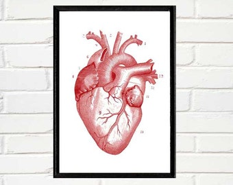 Anatomical HEART illustration instant digital printable download jpeg file red heart anatomy antique vintage art print wall decor 5x7, 8x10