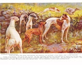 1930s Greyhound Whippets Dog Print -  Vintage Antique Animal Pet House Home Decor Book Plate Art Illustration for Framing