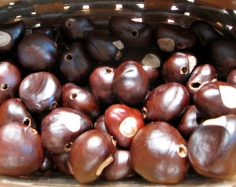 A box of Buckeyes for your crafting projects, 1lb is 50-60 buckeyes