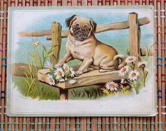 Jolly Pug:  Victorian Ephemera Card