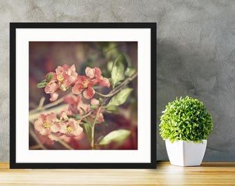 Sweet Pea - Fine Art Photograph - 8x8