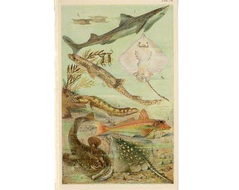 c. 1890 UNDER WATER SEA scene lithograph- original antique print - ocean fish shark ray angler coral ray gunard
