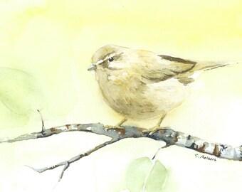 Song Bird -  4 x 6 inches Original Watercolor