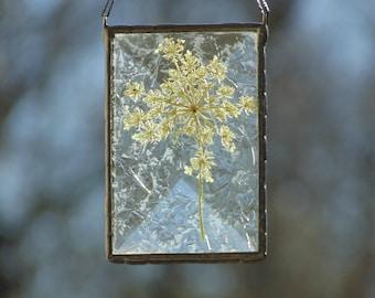 Pressed flower art suncatcher, stained glass ornament, Queen Annes Lace flower suncatcher, white flowers, gift under 30, gift for her