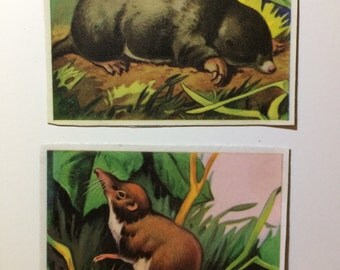 2x Magnets with upcycled scrap illustrations, animals! Mole and vole
